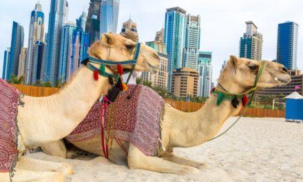 Vereinigte Arabische Emirate: Finanzaufsicht warnt vor ICOs