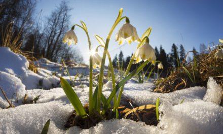 Altcoin-Marktanalyse KW10 – Monero-Rally – Kommt nun der Krypto-Frühling?
