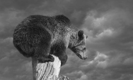 Meinungs-ECHO KW 32 – Bärenphilosphie