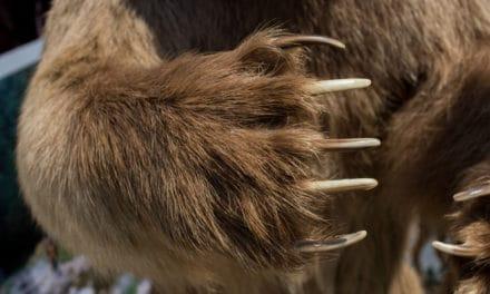 Im Griff der Bären: Smart-Contract-Auditor Hosho entlässt 80 Prozent der Belegschaft