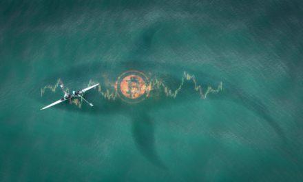 18.000 Bitcoin: Anonyme BTC-Wale decken sich massiv ein