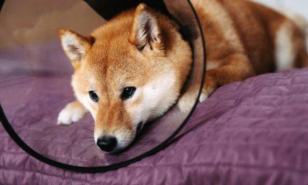 RIP Doge: Ist der Hype um Dogecoin nun endgültig vorbei?