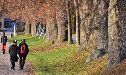 Neue Studie: 7.000 Schritte täglich reduzieren Risiko für Herzerkrankungen