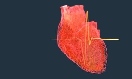 Personalisiertes Herz aus Bits und Bytes erleichtert künftige Therapien